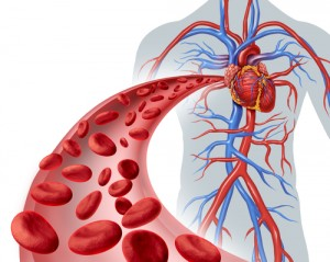 Blood Heart Circulation