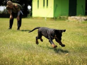 dog_training1